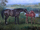 Wilson Hepple MAre and Foal