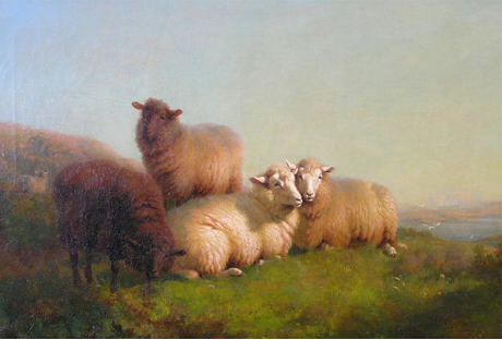 Sheep at rest by the Sea