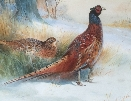 Pheasants. Thorburn.