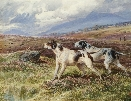 pointers on the Fell.Charles Jones.