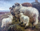 Sheep and Lambs.R.Watson.