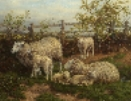 Sheep & Lambs.J.Dixon Clark.