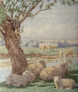 Sheep in Shade.1.W.Sidney.Cooper