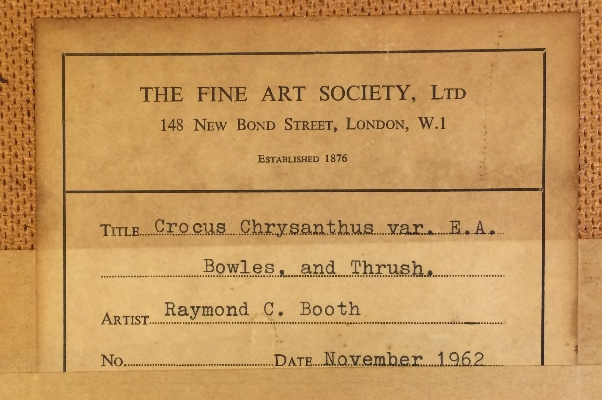 Crocus and Thrush.Label.Back.R.C.Booth