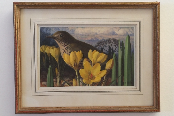 Crocus and Thrush.Frame.R.C.Booth