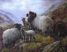 Robert Watson - Sheep in Highlands